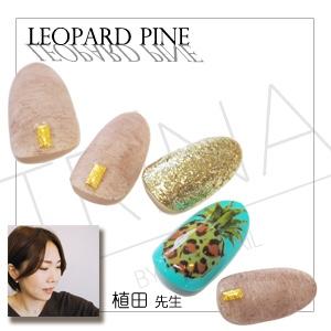 Leopard Pine 植田順子先生